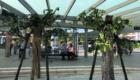 """Die """"living trees"""" in Bayreuth"""