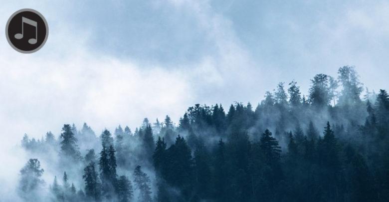 Nebel und Wald