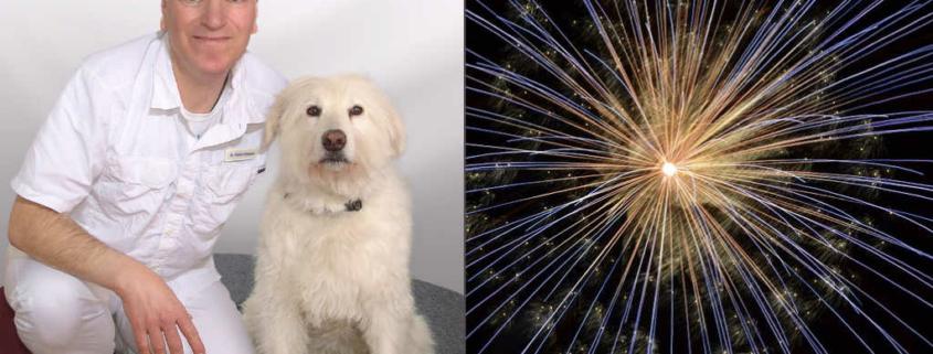 Foto von Tierarzt mit Hund und Silvesterrakete