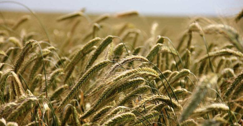 Symbolbild für Ackerbau