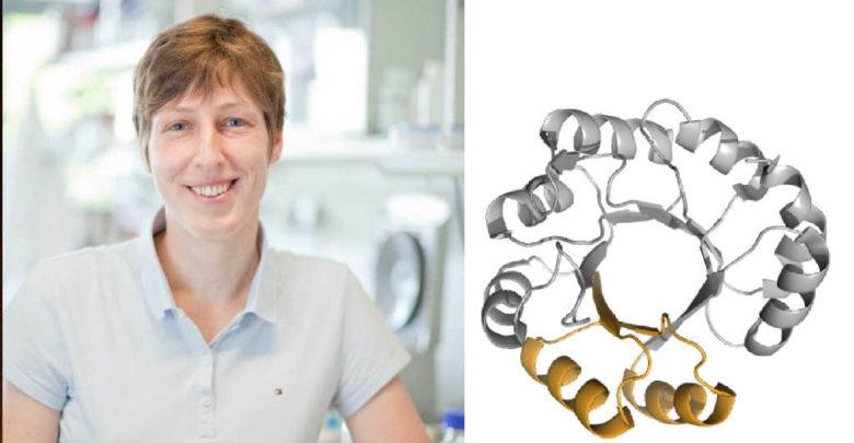Das deutsch-israelische Forschungsteam zu Proteinmechanismen