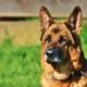 Ein Schäferhund hat in Hof einen anderen Hund gebissen. Nun gibt es Anzeigen.