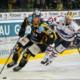 Tigers gegen Deggendorf: Kampf um den Puck