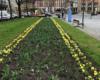 Bepflanzung der Stadt Bayreuth
