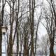 Kahle Bäume im März
