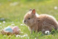 Was ist an Ostern mit den Ausgangsbeschränkungen in Bayern erlaubt? Symbolfoto: pixabay