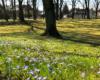 Grüner Hügel: Blumenwiese