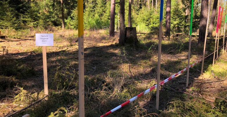 Klimawald: An einer Linie entlang werden die verschiedenen Baumarten gepflanzt.