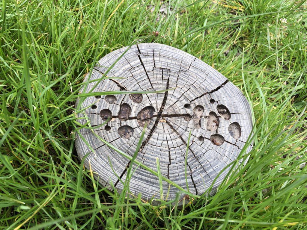 Spuren in der Wiese. Spielplatz Seublitz