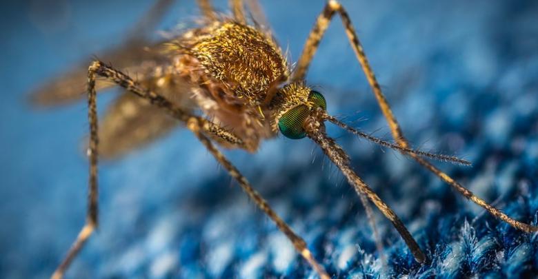 Mücke auf blauem Stoff