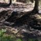 Der Tag danach: Spuren des Waldbrands bei Altenplos. Foto: Redaktion