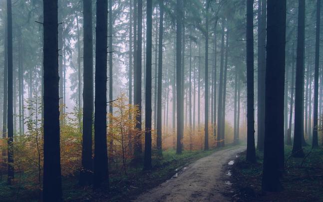 Wald-Nebel-Herbst