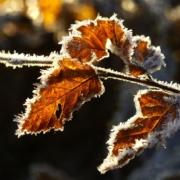 Frost im Raum Bayreuth