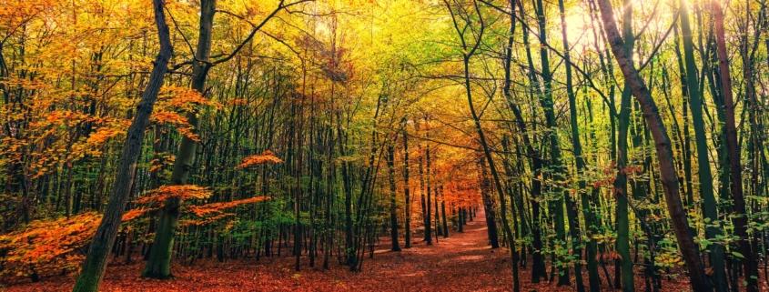 Das Wetter in Bayreuth: Sonniger Herbst