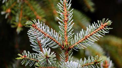 Bei Rehau ist ein Auto in einen Weihnachtsbaum gefahren, der auf der Straße lag
