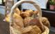 Die bt-Leser haben abgestimmt: Bei der Bäckerei Lang in Bayreuth gibt's die besten Brötchen. Archivfoto: Redaktion