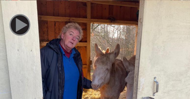 Tierpflegerin Manuela Wenger bei den weißen Eseln am Röhrensee. Foto: Oliver Riess