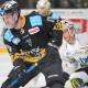 Bietigheim Steelers vs. Bayreuth Tigers: Karlsson im Duell. Archiv: Karo Vögel