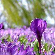Der Frühling in Oberfranken. Symbolbild: pixabay