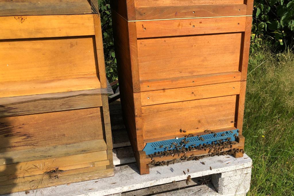 Bienenvölker in der Bayreuther Eremitage
