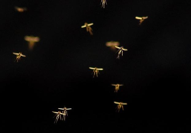 Mückenschwarm im Gegenlicht.