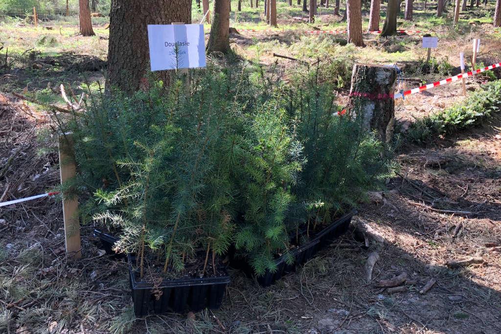 Hier können sich die Helfer die Setzlinge holen um sie nebenan zu pflanzen.