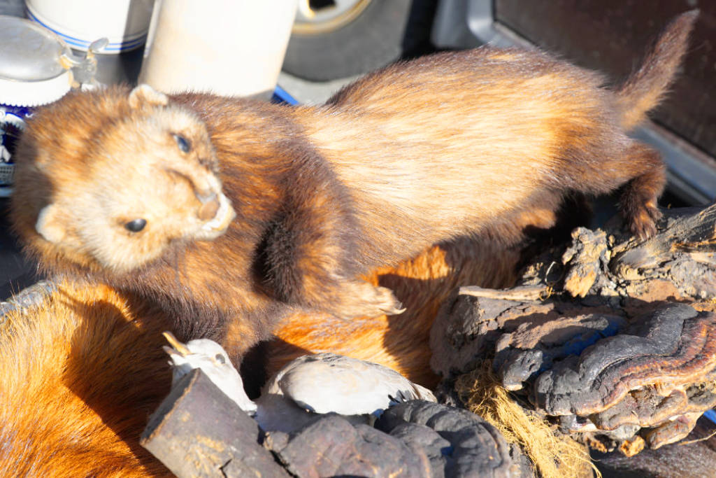 Ausgestopftes Tier auf dem Flohmarkt