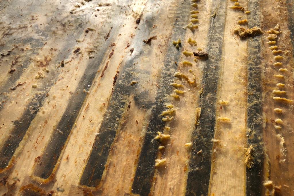 Blick von oben in den Bienenstock.
