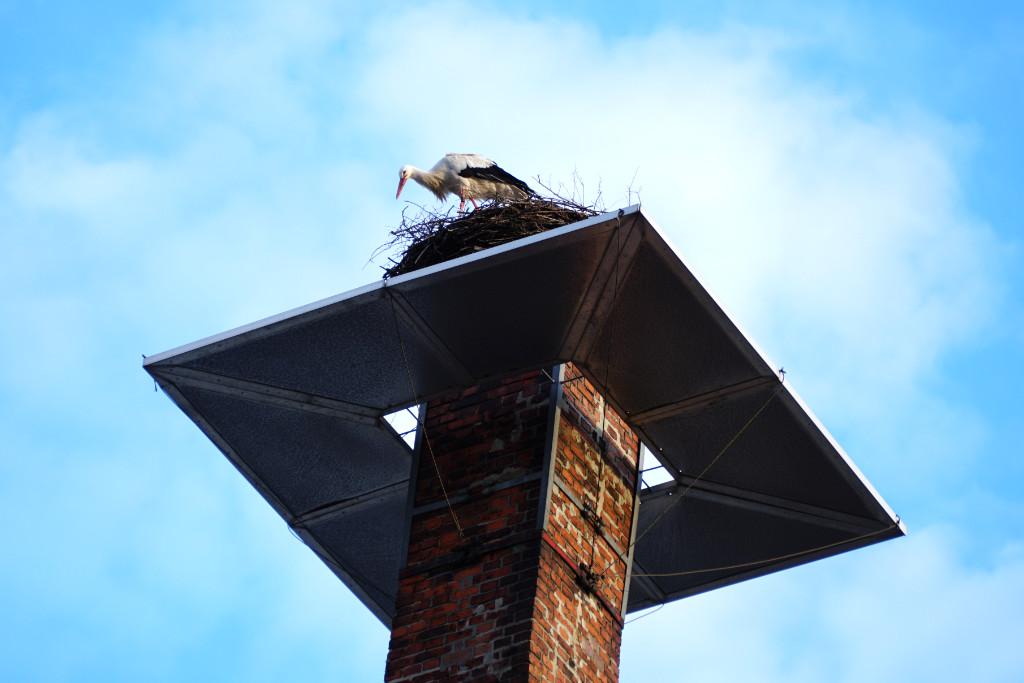 Der Storch in seinem Horst neben der Sudpfanne