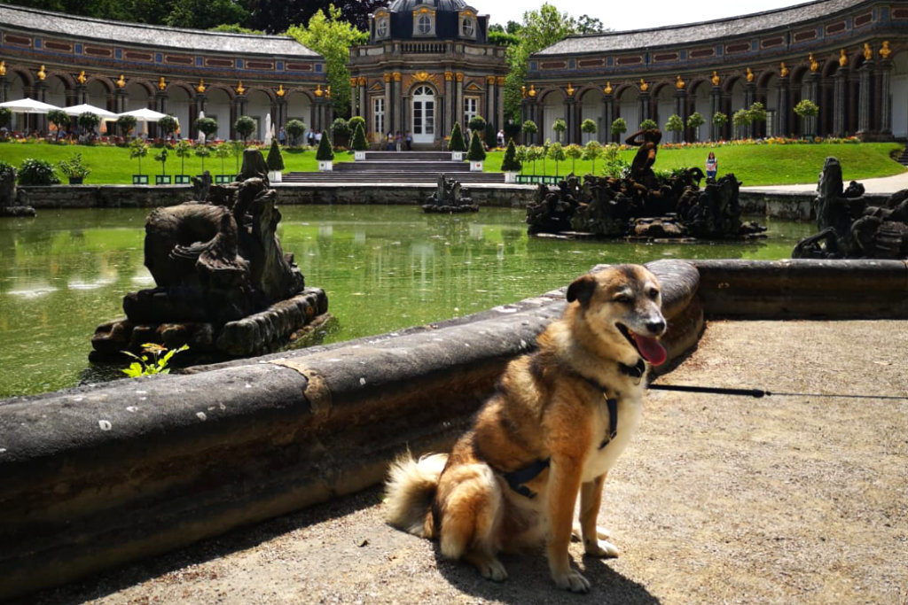 Mischling Lucky in der Eremitage
