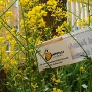 Die Saatgutpäckchen warten bereits darauf ausgesät zu werden (Foto: Summer in der City e.V.)