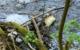 Schaum treibt in der Warmen Steinach. Ein Fall von Umweltverschmutzung? Foto: Katharina Adler