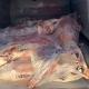 Der Kleintransporter hatte mehrere Tierkadaver und Innereien geladen. Foto: Polizei