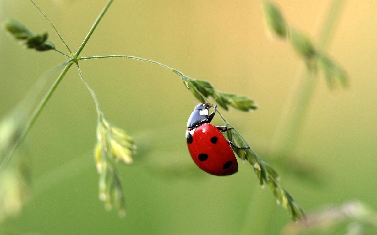 Der NABU fordert zum Insektenzählen auf. Symbolfoto: pixabay