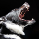 Ein Hund hat in Oberfranken einer Frau in den Bauch und ins Handgelenk gebissen. Symbolbild: Pixabay