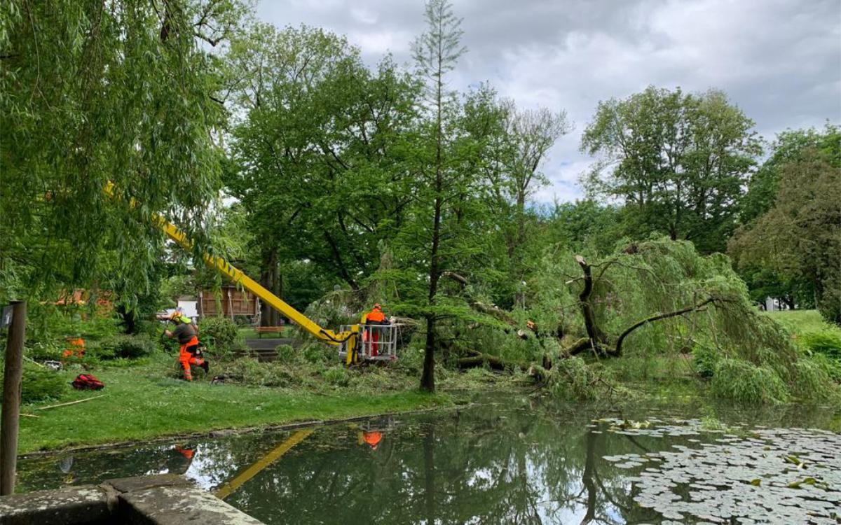 Im Bayreuther Festspielgarten ist ein großer Baum umgekippt. Foto: Katharina Adler