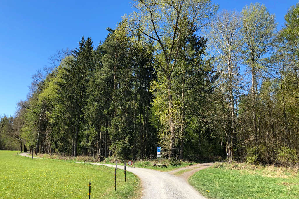 In diesem Waldstück gegenüber der Adolf-Wächter-Straße findet die Pflanzaktion zum Klimawald statt.