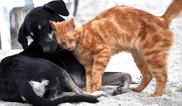 Im Tierheim Bayreuth tummeln sich aktuell viele Katzen, die auf Vermittlung warten. Symbolbild: Pixabay