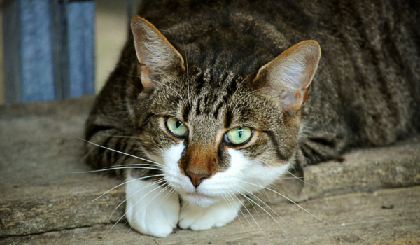 Die Tierhilfe Weidenberg und Umgebung im Kreis Bayreuth hat zu 86 Prozent Katzen im Besitz. Symbolbild: pixabay