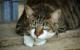 Tierquäler in Oberfranken unterwegs: Kater stirbt qualvollen Tod. Symbolbild: pixabay