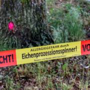 Die Autobahndirektion Nordbayern entfernt ab Montag (15.6.2020) Eichenprozessionsspinner entlang von oberfränkischen Autobahnen. Symbolbild: Pixabay