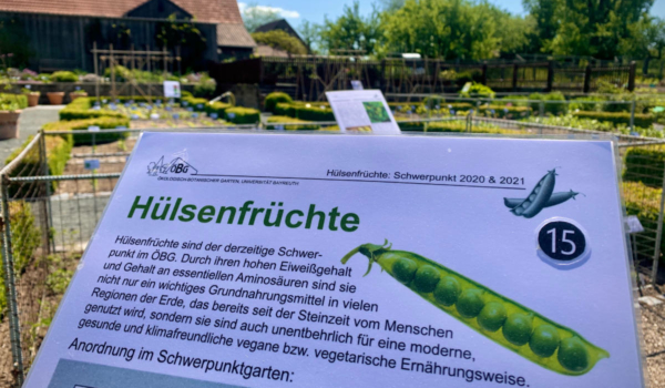 Hülsenfrüchte sind nur ein Teil im Ökologisch-Botanischen Garten in Bayreuth. Foto: Ökologisch-Botanischer Garten