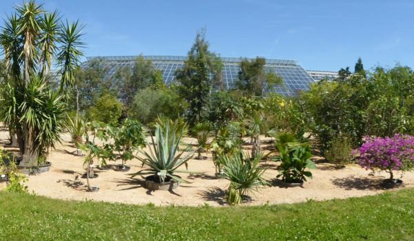 Übersicht Kübelpflanzen im Ökologisch-Botanischen Garten in Bayreuth. Foto: Ökologisch-Botanischer Garten Bayreuth