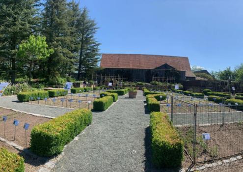 Der Nutzpflanzengarten im Ökologisch-Botanischen Garten in Bayreuth. Foto: Ökologisch-Botanischer Garten Bayreuth