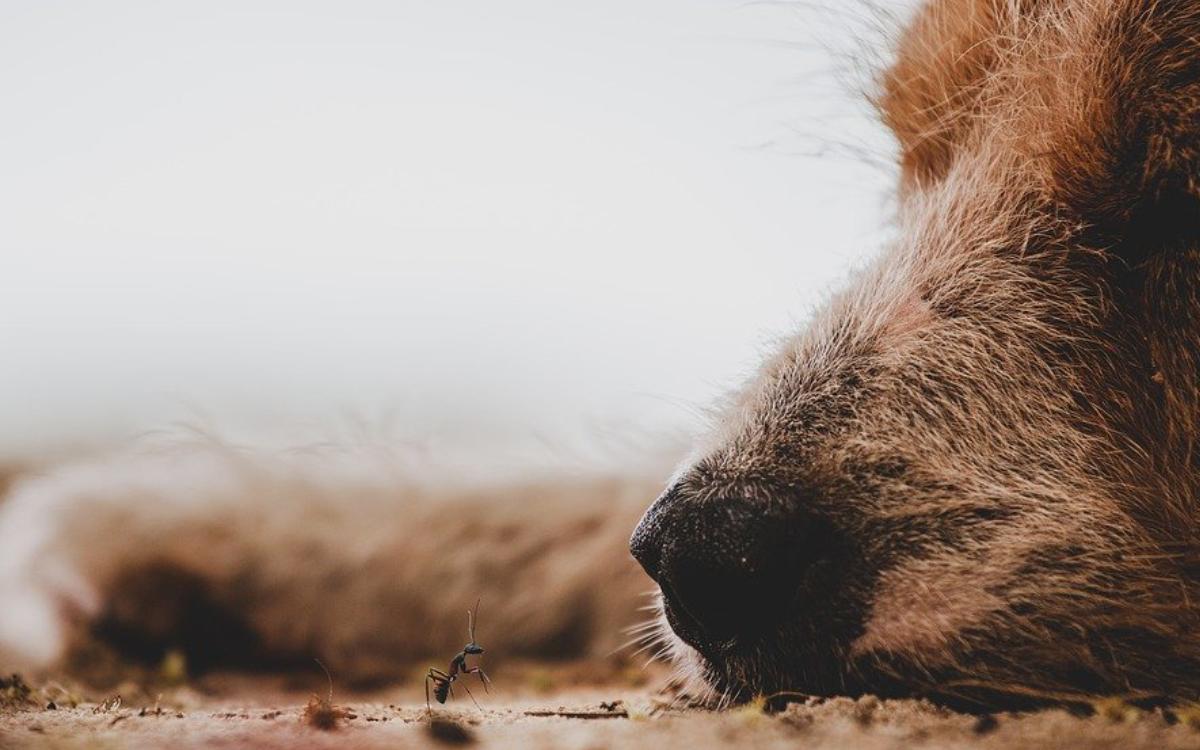 Die Polizei Marktredwitz warnt aktuell insbesondere Besitzer von Hunden vor möglichen Giftködern, ausgelegt im Stadtgebiet von Selb. Symbolbild: pixabay