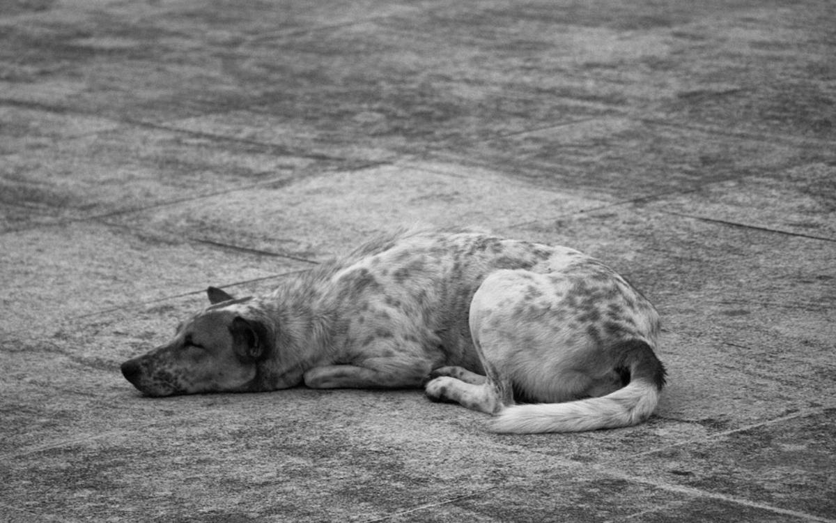Im Landkreis Bayreuth wurde ein Hund überfahren. Die Polizei sucht Zeugen. Symbolbild: Pixabay