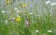 Die Stadt Bayreuth lässt die Gräser und Wiesen dieses Jahr länger wachsen. Der Grund ist ein neues Mähkonzept. Foto: Stadtgartenamt