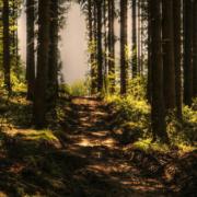 Ein Mann hat sich bei der Parkplatzsuche in Fürth um etwa 50 Kilometer verfahren und ist in einem Wald stecken geblieben. Symbolfoto: Pixabay