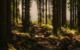 Im Wald wurde ein gestohlener Tresor gefunden. Symbolfoto: Pixabay
