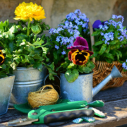Der NABU gibt Tipps fürs Gärtnern im Klimawandel. Foto: pixabay